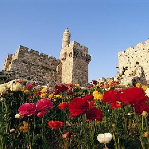 Red flowers in Jerusalem Israel